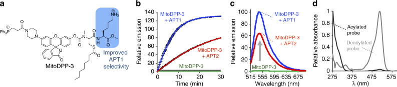 In vitro activity of mitoDPP-3. a Structure of mitoDPP-3. b In vitro fluorescence assay of 1 µM mitoDPP-3 in HEPES (20 mM, pH 7.4, 150 mM NaCl, 0.1% Triton X-100) with either 50 nM purified APT1 or APT2 (λ ex 490/20 nm, λ em 545/20 nm). For plots, n = 3, error bars are ± s.e.m. c Fluorescence emission spectra at 30 min from probes as treated in ( b ). d UV–vis spectra of 25 µM mitoDPP-3 (black; normalized at 275 nm) and deprotected fluorophore product (gray; normalized at 513 nm) in HEPES (20 mM, pH 7.4, 150 mM NaCl, 0.1% Triton X-100). MitoDPP-3 shows UV–vis absorbance at 300 nm with extinction coefficient 12.6 × 10 3 M −1 cm −1