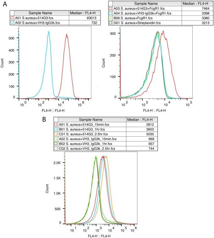 In vitro characterization of 514G3. A. 514G3 binds to S . aureus and leaves the Fc region exposed for FcγR1A receptor binding: 514G3 or VH3/IgG3-k isotype control was incubated with S . aureus cells for 15 min followed by the addition of biotin labeled FcγR1A. The figures show the overlay of median fluorescence intensities generated by the labeled antibodies or the Fcϒ receptor. There was a specific binding of 514G3 to the S . aureus cells within 15 min (left panel); and FcγR1A receptor could subsequently bind to the Fc region of 514G3 antibody bound to the surface of S . aureus (right panel). The right panel also shows two controls where S . aureus cells were incubated with biotinylated FcγR1A along with streptavidin-APC (light green trace) or streptavidin-APC only (dark green trace) to show that the high background is due to streptavidin-APC. The cells were analyzed on a BD Accuri and the data was analyzed using FlowJo 10.0.8. B. 514G3 is capable of binding to S . aureus in the presence of pooled human IgG. S . aureus was pre-incubated with 5mg of pooled human immunoglobulins at 37°C, before the addition of 100 μg/ml of 514G3 or the VH3/IgG3-k isotype control labeled with APC. There was an increase in the binding of 514G3 to S . aureus cell surface over the 2.5 hours tested. However, the signal with VH3/IgG3-k isotype remained the same over the time points tested. The graph plots the signal in the FL4 (APC) channel versus the total cell count. The median fluorescence intensity values are indicated in the column Median:FL4. The cells were analyzed on a BD Accuri and the data was analyzed using FlowJo 10.0.8, and the data is representative from multiple experimental repeats.