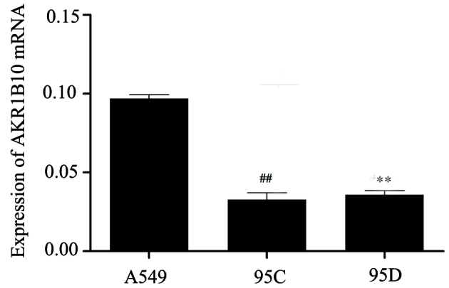 Expression of AKR1B10 in A549, 95C and 95D cell lines by reverse transcription-quantitative polymerase chain reaction. The expression levels of AKR1B10 mRNA in A549, 95C and 95D cell lines were 0.095±0.002, 0.033±0.004 and 0.036±0.002, respectively. ## P