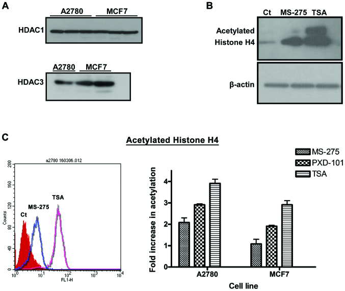 HDACi-induced acetylated histone H4 expression in A2780 and MCF7 cells. (A) Expression profile of HDAC1 and HDAC3 in A2780 and MCF7 cells. Cells were probed with primary anti-HDAC1 and anti-HDAC3 antibodies and the protein expression profile was developed by immunoblotting using ECL reagents as determined in Materials and methods. HDAC1; lanes 1–3: A2780 cells, lanes 4–6: MCF7 cells, HDAC3; lane 1: A2780 cells, lanes 2–3: MCF7 cells. (B) Upregulation of acetylated histone H4 expression in A2780 cells following HDACi treatment was monitored by western blot analysis and flow cytometry as described in Materials and methods. A2780 cells were treated with 0.1% DMSO, 10 µM MS-275 and 5 µM TSA for 24 h. (C) Fold increase of acetylated histone H4 as determined by flow cytometry following a 24-h treatment of 5 µM of HDACi. Left: Flow cytometry histogram, Right: Relative quantification of fluorescence signal. The error bars represent SD for at least n=3 determinations. HDACi, histone deacetylase enzyme inhibitor; TSA, Trichostatin A; SD, standard deviation.