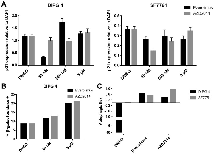 Drug effects on senescence and autophagy. (A) Effect of everolimus and AZD2014 on senescence, as measured by the ratio of immunofluorescence intensity of p21 compared to DAPI (error bars represent SEM). (B) Effects of everolimus and AZD2014 on senescence, as measured by the percentage of cells staining positive for β-galactosidase. (C) Effects of everolimus and AZD2014 on autophagy, as measured by autophagic flux, defined as the increase in LC3-II:tubulin western blot intensity ratio with the stated condition as compared to the stated condition plus chloroquine (an autophagy inhibitor).
