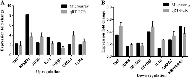 Comparison of DNA microarray and real-time PCR data. DNA microarray results and qRT–PCR quantification of the changes in expression levels of 10 selected cellular genes in goat endometrial epithelial cells at 1 h after exposure to PPRV. Data are expressed as fold changes in cellular gene expression. A Upregulated genes identified in the DNA microarray and qRT–PCR experiments after PPRV exposure for 1 and 24 h. B Downregulated genes identified in the DNA microarray and qRT–PCR experiments after exposure to PPRV for 24 h. Data are expressed as mean ± SD ( n = 3).