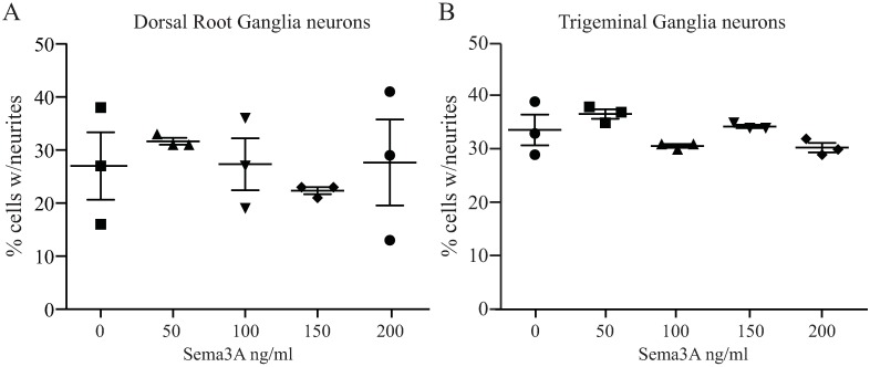 Sema3A does not inhibit the NGF induced neuronal growth of adult DRG and TG neurons. Isolated DRG and TG neurons were incubated with NGF for 3 and 2 days respectively to induce neuronal growth and then treated with different concentrations of Sema3A to determine any significant growth inhibitory effect on these PNS neurons. Neurite growth was evaluated 24 h after addition of Sema3A. (A) We found that about one third of the isolated neurons responded to the NGF treatment and addition of Sema3A produced no inhibitory effects such as the neurons kept growing similarly as compared to control cells treated with NGF alone. ( B ) TG neurons responded to NGF similarly to DRG neurons and addition of Sema3A did not alter the growth of neurites and no axonal retraction was observed. Neuronal growth was similar to controls that were resupplied with NGF over the course of the experiment. Values represent mean ± SEM, experiments were performed in triplicate, each dish had an average of 200 neurons for DRG and 60 neurons for TG; all neurons in every dish were evaluated.