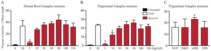 Sema3A is a potent inducer of neuronal growth. Since Sema3A is highly expressed in the cornea upon injury and does not inhibit the NGF induced growth on adult PNS neurons, we evaluated the effects of adding Sema3A alone to cultured neurons and compared to the NGF induced growth. (A) As described above DRG neurons responded well to NGF treatment. Surprisingly, Sema3A by itself is also a potent inducer of neuronal growth and similar neurite extension was observed at doses of 20 ng/ml Sema3A or higher. (B) Similarly, Sema3A is also a potent inducer of neuronal growth on TG neurons, and the number of TG neurons showing neurite growth was similar to that of neurons treated with NGF alone when incubated with Sema3A at 10 ng/ml or higher. (C) Sema3A from different sources, recombinant human or mouse, induced equally strong neuronal growth of TG neurons at equal concentrations. Values represent mean ± SD, experiments were performed in triplicate, each dish had an average of 200 neurons for DRG and 60 neurons for TG, and all neurons in a dish were evaluated. Neurite growth was evaluated at day 4 for DRG neurons and at day 3 for TG neurons. * indicate p