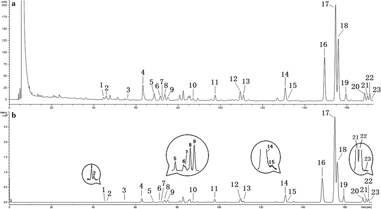 HPLC–DAD–ESI–QTOF/MS chromatogram of the ethyl acetate extract of J. procumbens : a UV chromatogram obtained at 205 nm, b TIC chromatogram detected in the positive ion mode