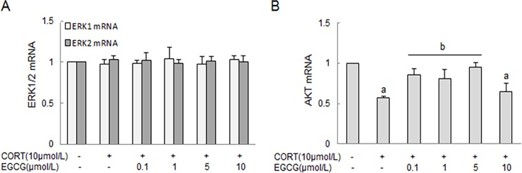 The effect of CORT and EGCG on ERK1/2 and AKT mRNA in primary hippocampal neurons. Primary hippocampal neuron cultures were pre-treated with EGCG for 2 h at indicated concentrations before stimulation with CORT for 24 h. The total RNA was isolated to measure the expression of ERK1/2 and AKT mRNA by RT-PCR, and expressed as mean ± SD of GAPDH mRNA levels. A) The expression of ERK1/2 mRNA; B) The expression of AKT mRNA. a P