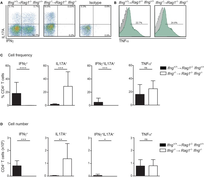 In the absence of IFNγ frequencies and numbers of IL17A producing colonic CD4 T cells are dramatically increased in colitic mice. Cytokine expression analysis of colonic lamina propria (LP) CD4 T cells, PMA/ionomycin-stimulated in the presence or absence of IFNγ. Colonic LP cells were isolated during active colitis (24–26 days post transfer of colitogenic Ifng +/+ , and Ifng −/− CD4 CD45RB hi T cells into Rag1 −/− , and Rag1 −/− Ifng −/− recipient mice, respectively). (A,B) Representative FACS blots showing IFNγ, IL17A, or <t>TNFα</t> expression of CD4 T cells. (C) Relative cell frequencies and (D) absolute cell numbers of cytokine expressing CD4 T cells. Bars indicate mean ± SD from three independent experiments with n = 5–9 mice per group. P -value was determined using the two-tailed Mann–Whitney test with * P