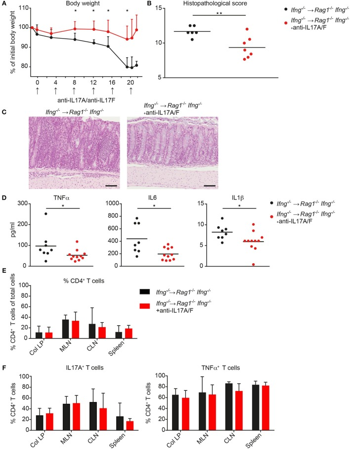 Neutralization of IL17A and IL 17F attenuates exacerbating CD4 T cell-induced colitis in the absence of IFNγ. Rag1 −/− Ifng −/− mice were transferred with Ifng −/− CD4 CD45RB hi T cells and treated with anti-IL17A and anti-IL17F neutralizing antibodies, or isotype control (250 μg/mouse) twice a week. (A) Body weight during colitis induction and (B) histopathological scores. (C) Representative hematoxylin and eosin staining of colonic tissue sections from mice during active phase of colitis. Scale bars indicate 100 µm. (D) Serum level for TNFα, IL6, and IL1β. Cells were isolated from colitic mice from the colonic lamina propria (col LP), mesenteric lymph nodes (MLN), caudal lymph node (CLN) and spleen, restimulated with PMA/ionomycin for subsequent intracellular FACS analysis. Relative cell frequencies of (E) CD4 T cells and (F) cytokine expressing CD4 T cells are shown in experimental mice treated, with, and without, anti-IL17A/IL17F mAb's. CD4 T cells were identified as single, live, autofluorescent negative, CD45 leukocytes, positive for CD4 and CD3. P -values were determined using the two-tailed Mann–Whitney test with * P
