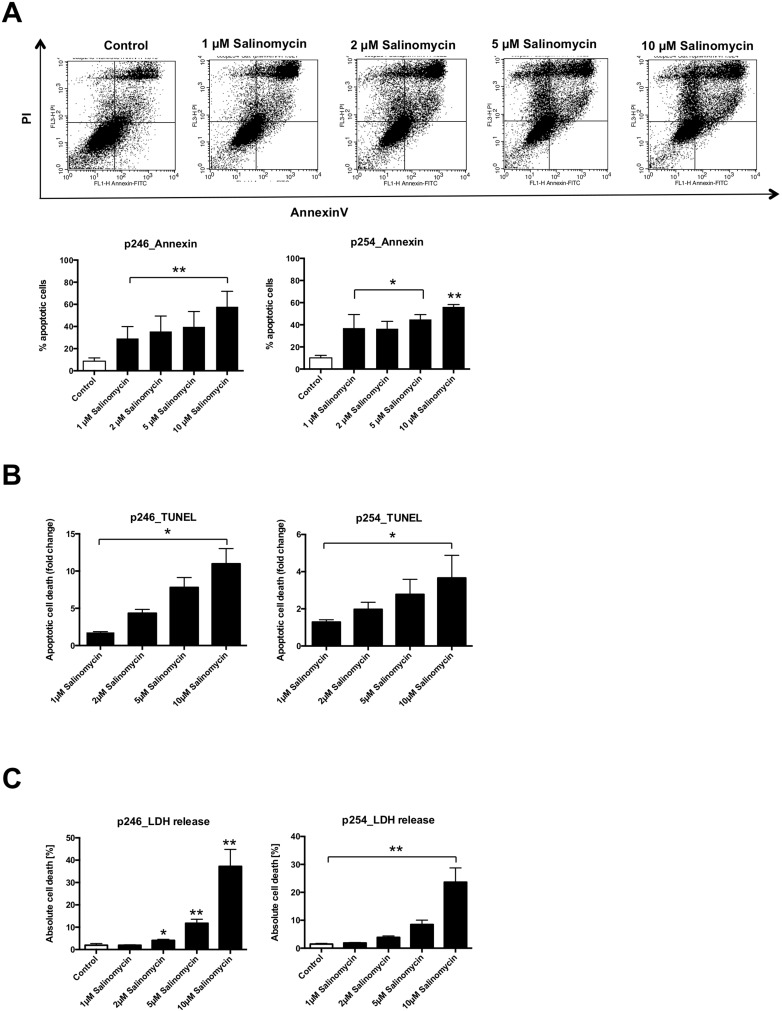 Treatment with Salinomycin induces apoptosis in murine CC cells ( A ) A total of 0.5 × 10 6 p246 or p254 cells were seeded in six-well plates and grown until confluence following exposure to increasing concentrations of Salinomycin (1, 2, 5, and 10 µM) for 24 h. Detection of apoptosis was performed using AnnexinV-FITC and propidium iodide staining, and cells were analyzed by flow cytometry. Cell death was further determined by quantification of DNA fragmentation ( B ) and LDH release assay ( C ). Results are displayed as representative dot blots or as a summary of at least three independent experiments; * P