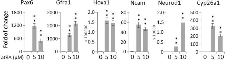 All-trans retinoic acid (atRA) induces neurogenic gene expression in NT2 cells Cells were treated with indicated concentrations of atRA for two days, and the transcript levels of canonical neuronal genes were determined by qPCR. Bar: mean ± SD; ** p