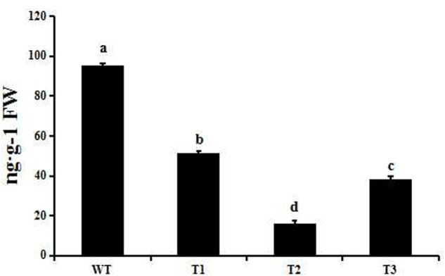 GA 4 levels in transgenic and wild-type poplar as measured by LC-MS/MS. Small letters over a column indicate significant differences between the WT and transgenic lines at P ≤ 0.05 (Duncan's multiple range test). Data are the mean ± SD ( n = 3).