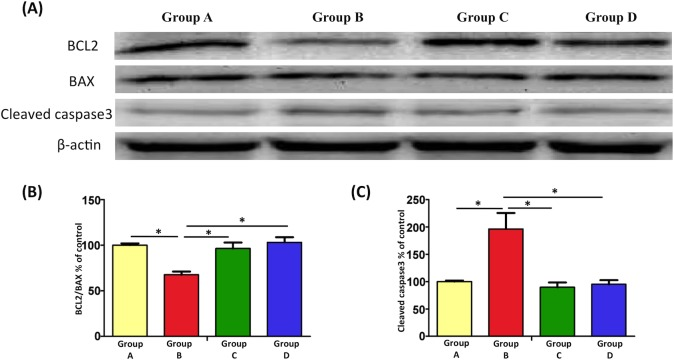EPO attenuates burn-induced motor neruon apoptosis. (A) Expression levels of BCL-2, BAX, and cleaved caspase-3 in the spinal cord ventral horn, measured through Western blotting. (B) Significant reduction in BCL-2/BAX expression was observed in Group B compared with Group A (100%). However, BCL-2/BAX expression was upregulated after EPO treatment. (C) Cleaved caspase-3 expression increased in the burn-induced group compared with the sham-control group. Similar to the notable reduction in cleaved caspase-3 expression following EPO treatment, a decrease in cleaved caspase-3 was observed. *: p