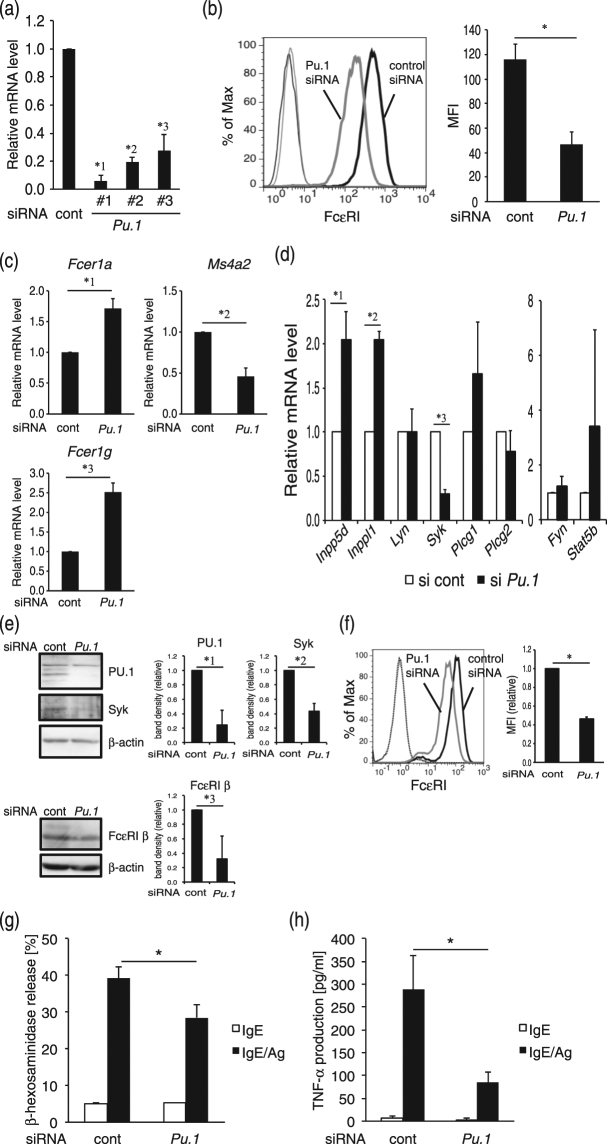 """Effect of PU.1 siRNA on mouse MCs. ( a ) mRNA level of PU.1. *1, p = 0.00064; *2, p = 0.00061; *3, p = 0.0011. n = 3–4. ( b ) Cell surface expression level of FcεRI. MFI; Mean fluorescence intensity. *, p = 0.000016. n = 5. ( c) mRNA levels of the α−, β−, and γ-chains of FcεRI. *1, p = 0.0000056; *2, p = 0.0000017; *3, p = 0.00000055. n = 8. ( d ) mRNA levels of intracellular molecules. *1, p = 0.029; *2, p = 0.0025; *3, p = 0.0018. n = 3. ( e ) Western blotting analyses of whole cell lysates. Full-length blots are included in Supplemental Fig. S1. *1, p = 0.024; *2, p = 0.012; *3, p = 0.023. n = 3–4. ( f ) Intracellular staining of <t>FcεRIα.</t> A typical result is shown at left. Quantitative analysis data of MFI obtained in three independent experiments are shown at right. * p = 0.0017. ( g ) IgE-mediated degranulation degree. * p = 0.032. n = 11. ( h ) IgE-mediated TNF-α release. * p = 0.037. n = 3. The data in Fig. 1 represent the mean ± SD of independent experiments (""""n"""" times repeated) performed with duplicate samples."""