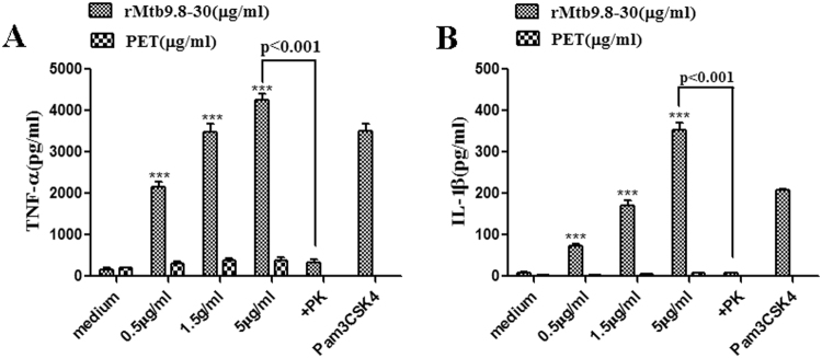 rMtb9.8 induces the secretion of TNF-α ( A ) and IL-1β ( B ) by mouse macrophages. RAW264.7 cells were cultured in the presence of various concentrations of rMtb9.8 (0, 0.5, 1.5, or 5 µg/ml). Pam3CSK4 (10 µg/ml), a TLR1/2 agonist, was used as a positive control. The pET30 vector tag protein without the Mtb9.8 gene (PET) was used as a negative control. Proteinase K abrogated the rMtb9.8-induced expression of TNF-α and IL-1β (p