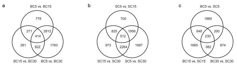 Overview of the serial analysis of differentially expressed genes (DEGs) identified by pairwise comparisons of the six transcriptomes: SC5, SC15, SC30, BC5, BC15, and BC30. ( a ) Venn diagram of the DEGs in bent culm (BC) at the three stages; ( b ) Venn diagram of the DEGs in straight culm (SC) at the three stages; ( c ) Venn diagram of the DEGs between BC and SC at the three stages.