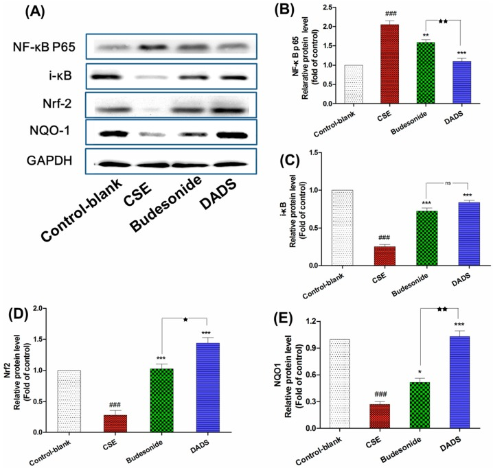 The effect of DADS on the protein expression of nuclear factor kappa B p65 (NF-κB p65), i-κB, nuclear factor erythroid 2-related factor 2 (Nrf-2), and NAD(P)H: quinone oxidoreductase 1 (NQO1) ( A ) Western blotting analyses of NF-κB p65, i-κB, Nrf-2, and NQO1 proteins; quantitative densitometric analyses of ( B ) NF-κB p65; ( C ) i-κB; ( D ) Nrf-2; and ( E ) NQO1 proteins normalized against glyceraldehyde-3-phosphate dehydrogenase (GAPDH). Each value represents the mean ± SEM of three independent experiments. ### p