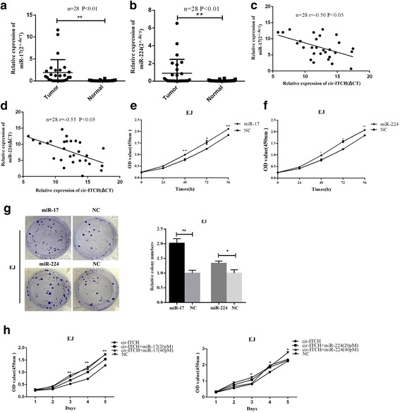 miR-17 and miR-224 played as oncogenes in BCa and eliminated the repression function of cir-ITCH. a and b miR-17 and miR-224 were up-regulated in BCa tissues as compared with adjacent normal tissues using qRT-PCR ( n = 28, ** P