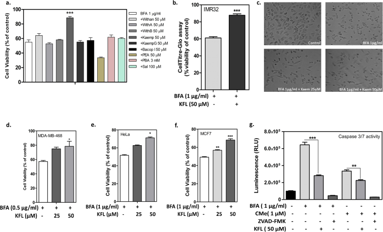 Kaempferol rescues cells against BFA induced cell death. ( a ) Screening for cytoprotective compounds (50 µM) against BFA (1 µg/ml) induced ER stress in IMR32 cell line. Cells were plated and pre-incubated with the test compounds (90 min) and treated with ER stress inducer BFA, incubated for 24 h. Cell viability was estimated by MTT assay. BFA: Brefeldin A; Withan: Withanone; With A: Withanaloide A; With B: Withanaloide B; kaemp: kaempferol; kaempG: Kaempfeol-3-O-robinbioside-7-O-glucoside; Bacop I: Bacopaside I; PEA: Palmitoylethanolamide; PBA: Phenyl Butyric acid; Sal: Salubrinal. ( b ) Confirmation of cytoprotective activity of kaempferol by measuring cellular ATP level using CellTitre Glo reagent. ( c ) Phase contrast images of IMR32 cells after BFA treatment in presence or absence of kaempferol pre-incubation. ( d–f ) Cytoprotective activity of kaempferol against BFA induced cell death in multiple cell lines with incubation time of 24 hours. Cell viability was assessed using MTT assay. ( g ) Inhibition of caspase 3/7 activation by kaempferol against BFA and CDDO-Me induced caspase 3/7 activation in IMR32 cells. Data represents mean ± SEM of experiment performed in triplicate (n = 3). Note: *Represents the significance between cell death inducer alone treated condition compared to kaempferol pre-treated condition, at p ≤ 0.05 (one way ANOVA).