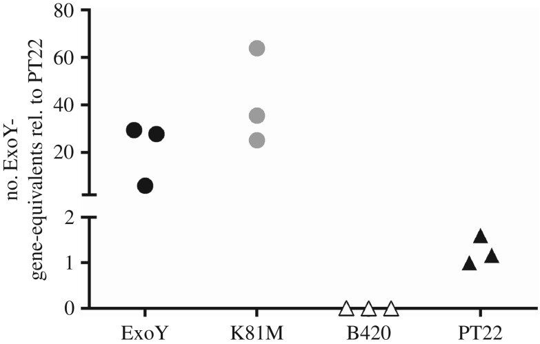Copy number of exoY in P. aeruginosa B420, PT22 and the recombinant PA103 ExoY and K81M. Copy number of exoY (PA2191, PAO1 genome coordinates 2410344–2411480) was determined from three independent preparations of genomic DNA by real-time PCR and normalized to the signals of the first DNA preparation of strain PT22 and of the adjacent hcnB gene (PA2194, coordinates 2412857–2414251). For better discrimination of low and high copy numbers of exoY in natural and genetically engineered strains y -axis was interrupted.
