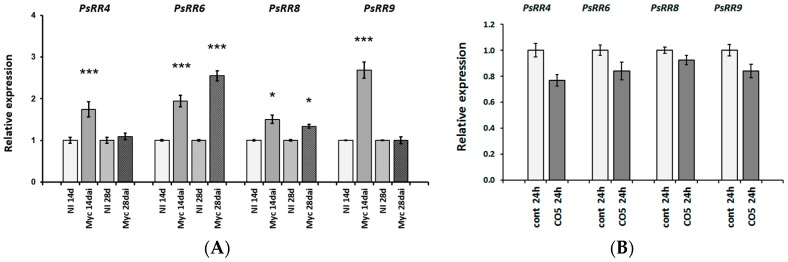 Relative expression of type-A cytokinin response regulator genes PsRR4 , PsRR6 , PsRR8 , PsRR9 was determined using qRT-PCR. ( A ) Analysis of pea roots on 14 and 28 days after inoculation with Rhizophagus irregularis (dai). NI, not inoculated; ( B ) Effect was estimated in pea roots treated with 10 −5 M CO5 for 24 h. As a control mock-treated roots were used. The relative expression was normalized against the constitutively expressed ubiquitin and actin genes. Asterisks indicate statistically significant differences compared with control (not inoculated or not treated plants): *** p