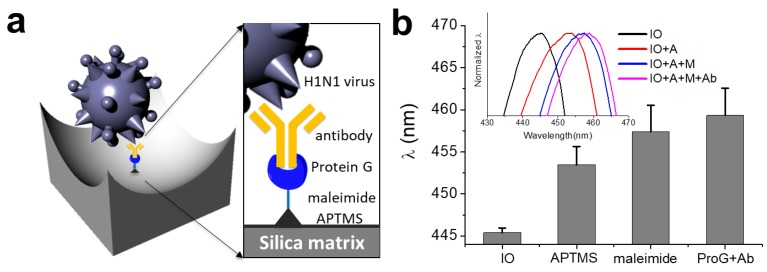 ( a ) Schematic illustration showing the molecular structures formed by the surface functionalization on the IO nanostructure for binding the H1N1 subtype; ( b ) Reflectance peak positions for the pristine, APTMS-treated, NHS-PEG 4 -Maleimide cross linker-treated, and Cys-ProG -antibody immobilized IOs. Inset shows reflectance spectra for all four samples. APTMS: 3-aminopropyl trimethoxysilane.
