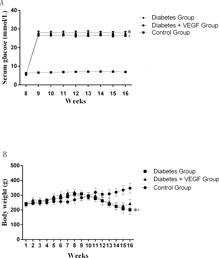 The change of serum glucose and body weights Serum glucose (A) and body weights (B) in diabetes rats compared to control group and diabetes +VEGF group. Diabetes group and diabetes + VEGF group were intraperitoneally injected with STZ at week8. From week 9, diabetes + VEGF group was daily treatment with VEGF. +* P