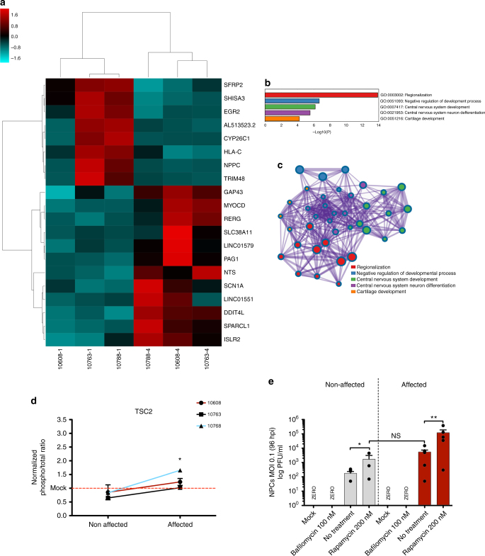 NPC gene expression analyses by RNA-Seq in cultured cells prior to ZIKV infection (see also Supplementary Fig. 3 ). a Heatmap representation and clusterization of top 20 most significant DEGs ( p