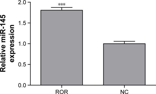 The anti-AGO2 RIP followed by qRT-PCR confirmed that ROR could bind to miR-145 (*** p