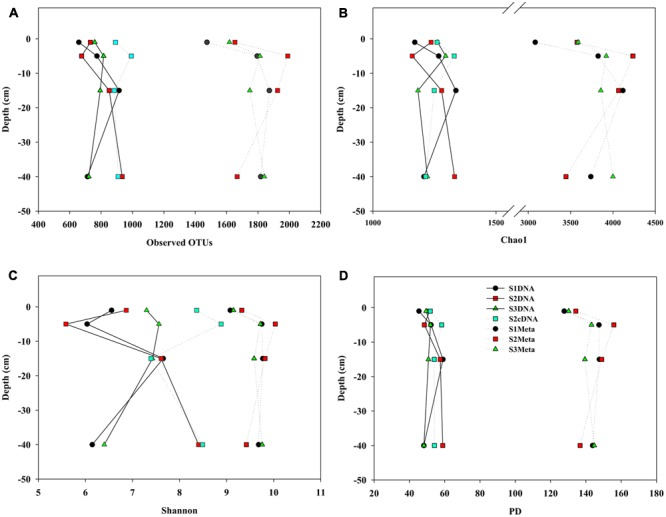 Comparisons of alpha indices for mudflat sediments at different depths derived from amplicon and MT-16S datasets. (A) Observed OTU numbers; (B) Chao 1; (C) Shannon indices; (D) PD indices. For each dataset, 5000 sequences were randomly selected for each diversity calculation. S1, S2, and S3 represent the sampling locations; DNA and cDNA indicate 16S rDNA and 16S cDNA amplicon datasets, and Meta indicates MT-16S datasets.