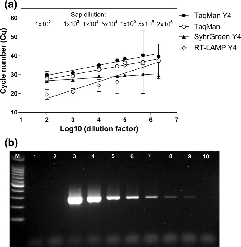 Comparison of sensitivity of the Y4 RT-LAMP, the TaqMan real-time RT-PCR, the Y4 TaqMan real-time RT-PCR, the Y4 SYBR Green real-time PCR (a), and the conventional Y4 RT-PCR (b). (a) For the real-time tests, Cq results are shown as a function of the logarithm of the dilution factor. The data are averages from at least two independent experiments performed in triplicate, and error bars indicate standard deviation. (b) Determination of the sensitivity of PVY detection by RT-PCR in sap from a PVY-infected plant diluted 1 × 10 2 , lane 3; 1 × 10 3 , lane 4; 1 × 10 4 , lane 5; 5 × 10 4 , lane 6; 1 × 10 5 , lane 7; 5 × 10 5 , lane 8; 1 × 10 6 , lane 9; 2 × 10 6 , lane 10. No-template control (PCR reaction containing water instead of cDNA), lane 1; negative control (RT-PCR reaction containing RNA from a virus-free plant), lane 2; Nova 100-bp molecular weight marker (Novazym Poland), lanes M