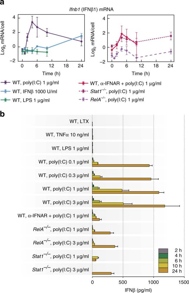 Transcriptional activation and secretion of IFNβ. a Time profiles of Ifnb1 (INFβ) mRNA levels in response to different stimuli. WT MEFs were stimulated with 1000 U/ml IFNβ, 1 μg/ml LPS, or 1 μg/ml poly(I:C) in the absence (left) or presence (right) of IFNAR-blocking antibody (α-IFNAR). Stat1 –/– MEFs and RelA –/– MEFs (right) were also stimulated with 1 μg/ml poly(I:C). α-IFNAR was added to cells at 10 μg/ml at 0, 3, 6 and 10 h after poly(I:C) transfection. Time profiles of relative mRNA levels were obtained with RT-PCR, and then rescaled to absolute numbers using digital PCR measurements (bars represent means ± s.e.m., n ≥ 2; see Supplementary Note for plots of all replicates compared with model simulations). b Secretion of IFNβ in response to TNFα, LPS or poly(I:C). WT MEFs were stimulated with 10 ng/ml TNFα ( n = 2), 1 μg/ml LPS, 0.1, 0.3, 1 and 3 μg/ml poly(I:C), or 1 μg/ml poly(I:C) in the presence of α-IFNAR ( n = 2). Both Stat1 –/– MEFs and RelA –/– MEFs were stimulated with 1 μg/ml or 3 μg/ml poly(I:C). For each condition, IFNβ concentration after 2, 4, 6, 10 and 24 h was measured by ELISA in 200 μl of culture medium harvested from above 25,000 ± 5000 cells. Bars represent means ± s.e.m. ( n = 3, except where stated otherwise, values of all replicates are provided in Supplementary Table 8 )