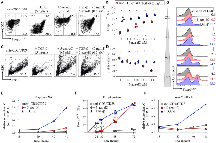 Interplay of 5-aza-2′-deoxycytidine (5-aza-dC) with IL-2R/TGF-βR signaling during Foxp3 + iTreg cell generation. CD4 + Foxp3 GFP− T cells with a naive phenotype (CD25 − CD62L high ) were FACS-isolated to high purity (99.7%) from pooled lymph nodes and spleen of adult Foxp3 GFP mice and subjected to T cell receptor (TCR) stimulation in vitro (anti-CD3/CD28-coated beads), either alone or with TGF-β and/or 5-aza-dC, as indicated. Note that all cultures were performed in the absence of exogenous IL-2. At indicated time points, cultures were analyzed for Foxp3 GFP and CD25 expression among gated CD4 + T cells. (A–D) 5-aza-dC synergizes with TGF-β in promoting Foxp3 + CD25 + iTreg cell generation. As indicated, TCR stimulation cultures were either left untreated or supplemented with TGF-β (5 ng/ml) and/or titrating amounts of 5-aza-dC (0.1, 0.25, 0.5, or 1.0 µM). (A) Representative flow cytometry of Foxp3 GFP /CD25 expression among gated CD4 + T cells, and (B) composite percentages of CD4 + Foxp3 GFP+ iTreg cells at day 3 of cultures. (C) Corresponding representative flow cytometry of cell viability (FSC/SSC), and (D) composite percentages of viable cells within the indicated FSC/SSC gate. The level of significance was determined by multiple t -tests (unpaired). P ≤ 0.05 (*). (E–H) Naive CD4 + Foxp3 GFP− T cell stimulation cultures were either left untreated (gray circles) or supplemented with 0.5 ng/ml TGF-β (blue triangles) or 0.5 µM 5-aza-dC (red circles) and subjected to further analysis at indicated time points. (E) Kinetics of Foxp3 mRNA expression. (F,G) Kinetics of Foxp3 protein expression. (F) Composite percentages and (G) representative histograms of Foxp3 GFP expression among gated CD4 + T cells at indicated time points and culture conditions. (H) Kinetics of Smad7 mRNA expression. Gene expression (E,H) was determined by real-time RT-PCR employing FACS-purified populations of total viable cells (i.e., irrespective of their Foxp3 GFP expression status). HPRT1 wa
