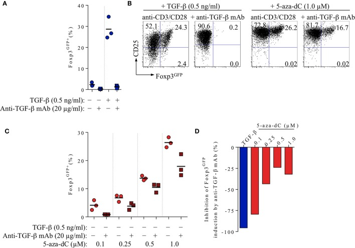Impact of FCS-/T cell-derived TGF-β on 5-aza-2′-deoxycytidine (5-aza-dC)-mediated Foxp3 + iTreg cell generation, in the absence of exogenously added TGF-β. CD4 + Foxp3 GFP− T cell stimulation cultures (for experimental details, see Figure 1 ) were either left untreated or supplemented with added TGF-β (0.5 ng/ml) or titrating amounts of 5-aza-dC (0.1, 0.25, 0.5, or 1.0 µM), with or without neutralizing anti-TGF-β mAbs (20 µg/ml), as indicated. Cultures were analyzed at day 3 for Foxp3 GFP and CD25 expression among gated CD4 + T cells. Note that Figure S1 in Supplementary Material depicts experimental details on anti-TGF-β mAb titration. (A) 20 µg/ml anti-TGF-β mAb efficiently abrogates Foxp3 induction in T cell receptor stimulation cultures without (left) or with (right) exogenously added TGF-β (0.5 ng/ml). (B–D) Inhibition of 5-aza-dC-driven Foxp3 + iTreg cell generation by anti-TGF-β mAb-mediated TGF-β blockage, in the absence of added TGF-β. (B) Representative flow cytometry of Foxp3 GFP /CD25 expression among gated CD4 + T cells, and (C) composite percentages of CD4 + Foxp3 GFP+ iTreg cells at indicated culture conditions. (D) Percentage inhibition of 5-aza-dC-mediated Foxp3 GFP+ iTreg cell generation by TGF-β blockage (see Materials and Methods for details). Symbols and horizontal lines (A,C) indicate triplicate wells and mean values, respectively. Numbers in dot plots (B) indicate the percentages of cells within the respective quadrant. Data are representative of at least two independent experiments.