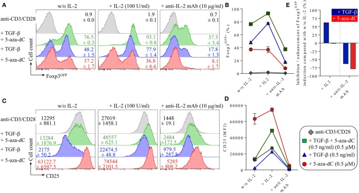Impact of IL-2 and IL-2R signaling on 5-Aza-2′-deoxycytidine (5-aza-dC)-mediated Foxp3 + iTreg cell generation. Naive CD4 + Foxp3 GFP− T cells were T cell receptor stimulated with anti-CD3/CD28-coated beads either alone (shown in gray) or with added TGF-β and 5-aza-dC (0.5 ng/ml and 0.5 µM; shown in green), added TGF-β (0.5 ng/ml; shown in blue) or 5-aza-dC (0.5 µM; shown in red). As indicated, either IL-2 (100 U/ml) or neutralizing anti-IL-2 mAb (10 µg/ml) were added. Cultures were analyzed on day 3 for Foxp3 GFP and CD25 expression among gated CD4 + T cells. (A) Representative histograms of Foxp3 GFP expression among gated CD4 + T cells and (B) composite percentages of CD4 + Foxp3 + iTreg cells at indicated culture conditions. (C) Representative histograms and (D) median fluorescence intensities (MFIs) of CD25 expression among gated CD4 + T cells. (E) Percentage inhibition/enhancement of TGF-β-mediated (blue bars) and 5-aza-dC-mediated (red bars) Foxp3 GFP+ iTreg cell generation by the addition of exogenous IL-2 (left) or anti-IL-2 mAbs (right), as indicated (see Materials and Methods for details). Numbers in histograms show (A) the mean values of the percentage of Foxp3 GFP+ cells and (C) MFI values of CD25 expression ±SD at indicated culture conditions. Graphs (B,D) depict mean ± SD. Data are representative of two independent experiments.