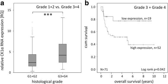 Tumor differentiation-dependent investigation of CK1α RNA expression. a Box plot representing group comparison of relative CK1α RNA expression in low-grade and high-grade CRC patients. b Kaplan-Meier plot displaying the overall survival of Grade 3 and Grade 4 tumors of CRC patients, divided according to relative CK1α RNA expression. *** p