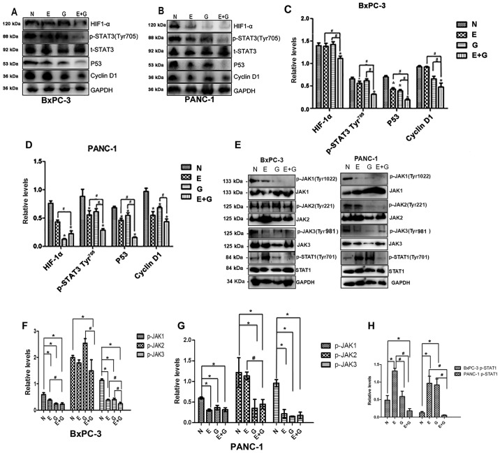 The gemcitabine-erlotinib (E+G) combination group inhibits the activity of the JAK-STAT pathway, as well as the expression of downstream HIF-1α, cyclin D1 and p53. (A and B) The protein levels of phosphorylated STAT3 Tyr 705 (p-STAT3 Tyr 705 ), HIF-1α, p53, cyclin D1 in BxPC-3 and PANC-1 cells were analyzed by western blotting, respectively. (C and D) The protein expression of p-STAT3 Tyr 705 , HIF-1α, p53, cyclin D1 in BxPC-3 and PANC-1 cells was calculated using one-way ANOVA. *P