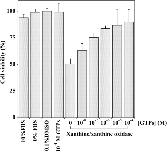 Effect of the pretreatment with GTPs on Xanthine–Xanthine Oxidase induced cell cytotoxicity in MKN-28 cells. MKN-28 cells were pre-incubated with the indicated GTPs concentration in serum-free medium containing 0.1% (v/v) DMSO (vehicle) for three hours; the cells were then exposed to DMEM containing Xanthine (1 mM) and Xanthine oxidase (75 mU/ml) or with serum-free medium containing the vehicle alone for additional two hours. Control cells were incubated with DMEM in the presence (10%) or in the absence of FBS, as well as in the presence of 10 −4 M GTPs. Cell viability was determined as reported in Section 2.3 . The values represent the mean of three separate experiments performed in triplicate.