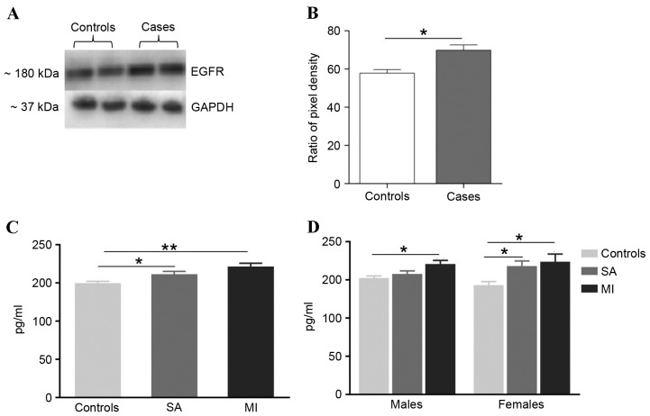 EGFR levels confirmed by western blot analysis and <t>ELISA</t> in <t>CAD</t> patients and control subjects. (A) Western blotting images of plasma EGFR and loading control GAPDH were assayed in CAD patients and controls. (B) Quantification of relative intensity levels of EGFR in CAD patients and controls adjusted for loading control. ImageJ software was used. (C) ELISA-based comparison of mean EGFR levels between the CAD patients and control groups. A significantly higher level of EGFR was observed in the MI and SA groups in comparison with controls. (D) EGFR levels were only significantly different between male MI groups in comparison with male control group. The EGFR levels were significantly different between female MI and SA groups when compared with controls. *P≤0.05, **P≤0.001. EGFR, epidermal growth factor receptor; CAD, coronary artery disease; MI, myocardial infarction; SA, stable angina.