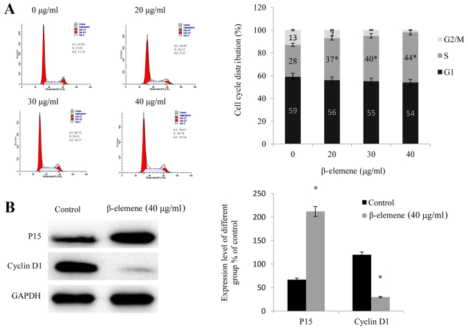 β-elemene induces cell cycle arrest in SiHa cells during G1. (A) Following treatmentof SiHa cells with increasing doses of β-elemene (0, 20, 30, and 40 µg/ml) for 48 h, flow cytometry was performed in order to investigate the influence of β-elemene on the progression of the cell cycle; *P