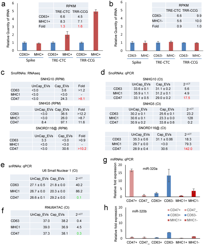 Validation of small RNA enrichment in CD47 + , CD63 + and MHC1 + captured EVs. ( a,b ) Validation of tRNAs using rtStar™ Pre-designed Human tRNA primer sets for TRE-CTC, TRR-CCG and internal spike control using total RNA from captured and uncaptured CD63 and MHC1 EVs. ( c ) The table presents RPM of SnoRNAs in CD47 + , CD63 + , and MHC1 + EVs. ( d ) Expression of SNHG5, SNHG10 and SNORDA116@ snoRNAs using total RNA from captured and uncaptured CD47, CD63 and MHC1 EVs via TaqMan real-time PCR. (e) U6 using total RNA from captured and uncaptured CD47, CD63 and MHC1 EVs via real-time PCR. ( f ) snRNA expression of RNU6ATAC using total RNA from captured and uncaptured CD47, CD63 and MHC1 EVs via TaqMan assay. ( g,h ) miRNA expression of mir-320a and mir-320b using total RNA from captured and uncaptured CD47, CD63 and MHC1 EVs determined using real-time PCR.