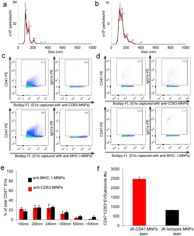 Characterization of Jurkat T cell EV fractions and CD47 expression. (a,b) EVs were extracted from wild type ( a ) and CD47-deficient Jurkat T cells ( b ) using the Exo-Quick kit, and vesicle size and concentration were quantified by Nanosight analysis. ( c) EVs released by Jurkat cells were labeled using Bodipy-FL and captured with anti-CD63-MNPs (upper panel) or with anti-MHC I-MNPs (lower panel) and stained with PE-conjugated anti-CD47 or isotype control antibodies. Representative experiment out of 3. ( d) EVs released by CD47-deficient JinB8 cells were captured with anti-CD63-MNPs (upper panel) or with anti-MHC I-MNPs (lower panel) and stained with anti-CD47 or with isotype control antibodies. Representative experiment of out of 3. ( e ) Size distribution of CD47 + EVs captured with anti-CD63-MNPs (red bars) or with anti-MHC1-MNPs (black bars). Representative experiment out of 3. (f) EVs released by Jurkat cells were captured with anti-CD47-MNPs and stained for CD63 antigen. Volumetric control was used to estimate concentration of CD47 + CD63 + EVs. One representative experiment is presented out of 2 performed.