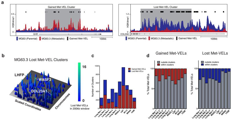 Met-VEL clusters occur across metastatic cancers a . UCSC browser view of <t>H3K4me1</t> profiles in MG63.3 (metastatic) and MG63 (parental) cell lines illustrating an example of a gained (left) and lost (right) Met-VEL cluster. Met-VELs identified by black bars. 200kb Met-VEL clusters highlighted in gray. b . Genome-wide lost Met-VEL landscape for MG63.3 cell line. Rows represent scaled chromosomal coordinates. Peaks represent maximum gained Met-VEL counts in 200kb sliding windows. Predicted target genes for selected peaks are labeled. c . Gained and lost Met-VEL cluster counts in patient lung metastases/primary tumors and metastatic/parental cell line pairs. d . Percentage of total gained (top) and lost (bottom) Met-VELs within and outside of clusters in patient lung metastases/primary tumors and metastatic/parental cell line pairs.