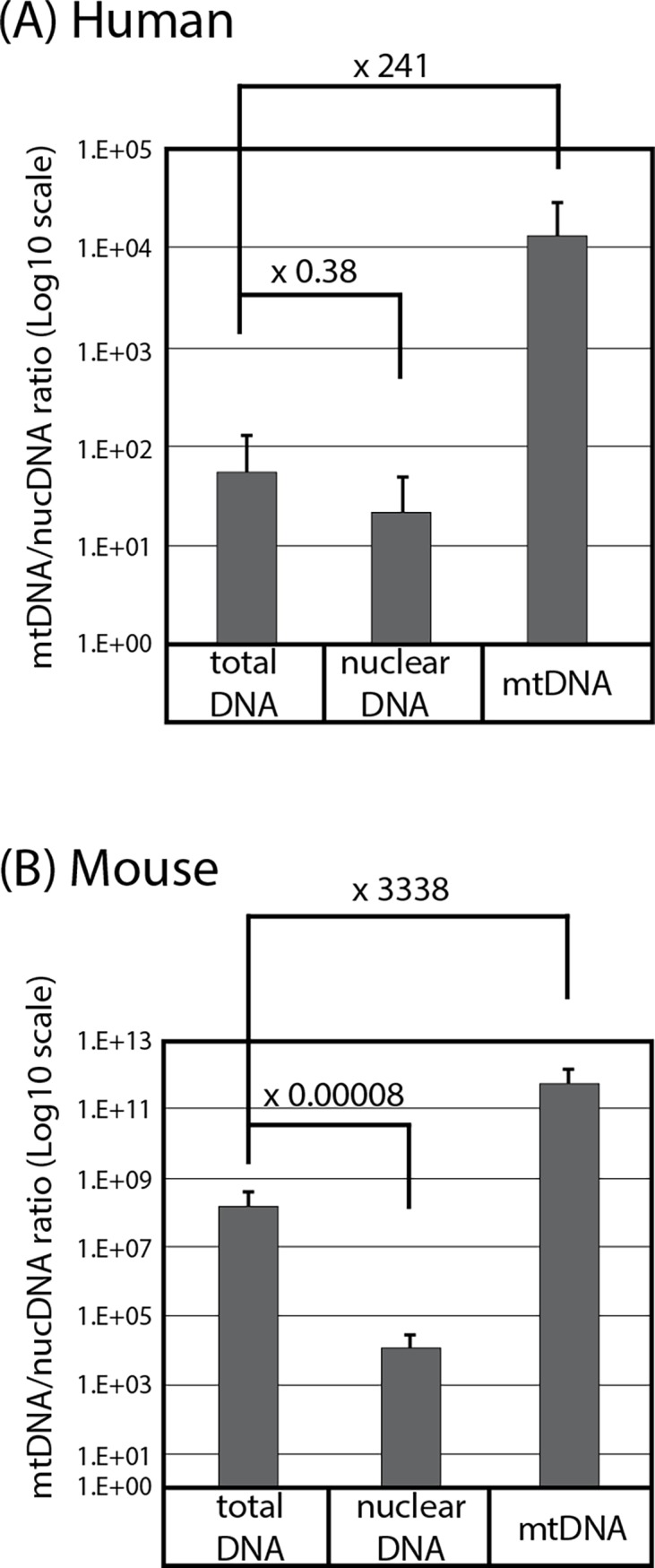 Enrichment of human and mouse mtDNA over nuclear DNA. Ratios of copy numbers of human (A) or mouse (B) mtDNA and nuclear DNA were determined by qPCR of mtDNA and nuclear DNA marker genes (Mean±SD, triplicated assays). Numbers show fold enrichment compared to total DNA.