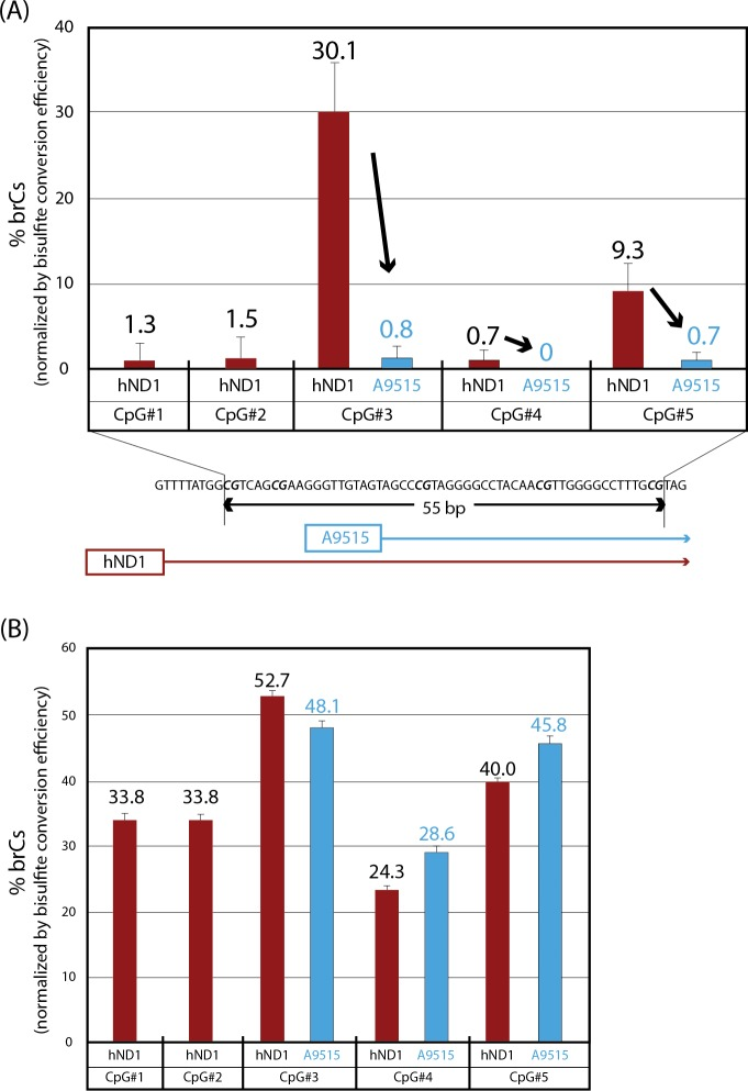 Detection of bisulfite-resistant cytosines in purified, linearized human mtDNA by bisulfite pyrosequencing using converted template-selective (A9515) and unselective (hND1) sequencing primers. Ratios of brCs were determined by bisulfite pyrosequencing (Mean±SD, triplicated assays). (A) The A9515 sequencing primer, which was highly selective to bisulfite-converted DNA, interrogated three CpG sites (CpG #3–5) whereas non-selective sequencing primer hND1 interrogated all these CpG sites plus two additional CpG sites (CpG #1 and 2). (B) Positive control assay was performed using in vitro partially methylated NCAs templates. High CpG methylation levels at three CpG sites (CpG #3–5) were detected using A9515 sequencing primer (CpG sites #1 and #2 were out of the assay coverage using this sequencing primer). hND1 sequencing primer detected high CpG methylation at all five CpG sites (CpG #1–5).