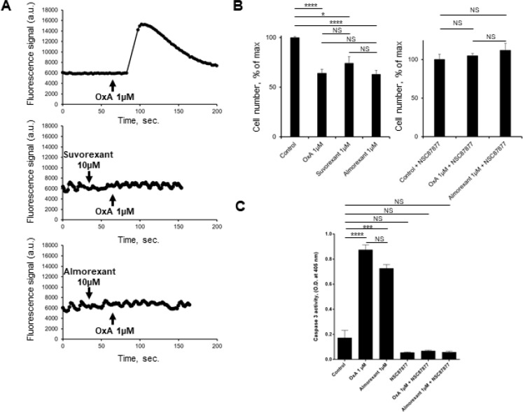 Effect of almorexant and suvorexant on intracellular Ca 2+ release, cell growth and <t>caspase-3</t> activity ( A ) Intracellular Ca 2+ production was detected in HEK-293 cells expressing recombinant native OX1R using Fluoforte Calcium Assay Kit (Enzo Life Sciences, NY, USA). Cells were challenged with 1 μM of OxA (top panel) or 1 μM OxA after preincubation with 10 μM suvorexant (middle panel) or 10 μM almorexant (bottom panel). ( B ) AsPC-1 cells were incubated for 48 h with OxA or almorexant or suvorexant in the presence (right panel) or in the absence (left panel) of 50 μM NSC87877. ( C ) colorometric Caspase-3 activity detection at 405 nm in AsPC-1 cells incubated with 1 μM OxA or 1 μM almorexant in the presence or in the absence of 50 μM NSC87877. * p