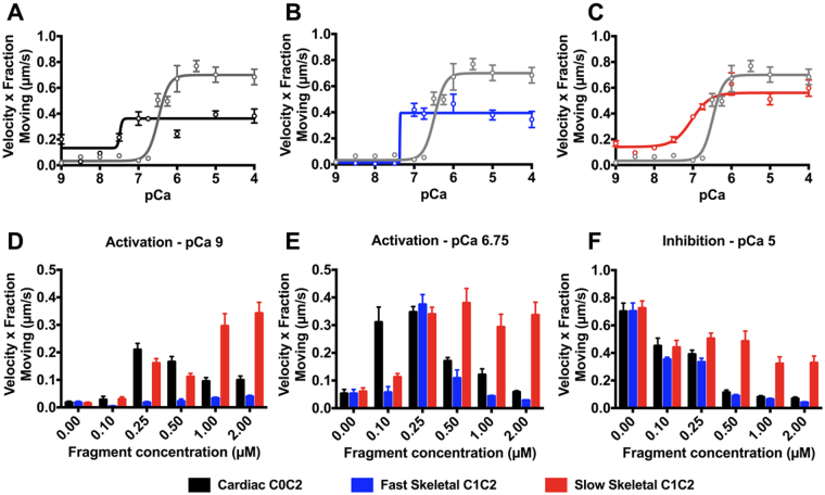 In vitro motility assays demonstrate MyBP-C regulation by promoting and inhibiting motility of native thin filaments (NTFs) at low and high Ca 2+ , respectively. ( A – C ) Control NTFs (grey line) show a sigmoidal increase in activation in response to increasing calcium levels. C0C2, fsC1C2, and ssC1C2 (0.25 µM) all shift this response to the left, indicating an increased activation effect at lower Ca 2+ levels. ( A ) C0C2 activates NTF sliding velocities at both low Ca 2+ levels and inhibits NTF motility at high Ca 2+ levels. ( B ) fsC1C2 is unable to activate NTF motility at low Ca 2+ levels, but inhibits NTF motility at higher Ca 2+ levels. ( C ) Conversely, ssC1C2 activates NTF motility at low Ca 2+ levels, but lacks the capacity to limit NTF motility at high Ca 2+ levels. Effects of MyBP-C N-termini varied, depending on concentration, as demonstrated by dose-dependent responses of C0C2, fsC1C2, and ssC1C2 on NTF motility at ( D ) pCa 9 ( E ) pCa 6.75 and ( F ) pCa 5. Graphs represented as mean ± SEM.