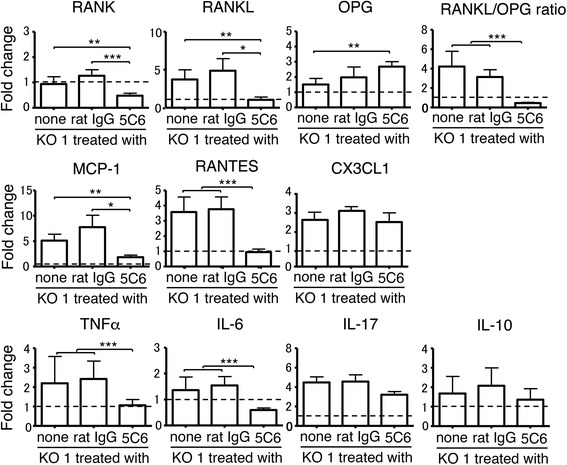 Comparisons of mRNA expression levels of receptor activator of NF-κB (RANK), RANK ligand (RANKL), osteoprotogerin (OPG), RANKL/OPG ratio, monocyte chemotactic protein-1 (MCP-1), regulated on activation, normal T cell expressed and secreted (RANTES), CX3CL1, TNFα, IL-6, IL-17, and IL-10 in the ankle joints analyzed by qRT-PCR among untreated, normal rat IgG-treated, and monoclonal antibody (5C6)-treated FcγRIIB-deficient mouse strain (KO1) mice at 10 months of age. Values in each of the three groups of mice were evaluated as fold change compared with the expression levels in B6 mice (broken line). Data are shown as mean + SEM of six mice from each group. Statistical significance is shown (analysis of variance * P