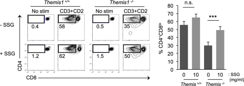 Inhibition of SHP-1 PTP activity rescues in vitro maturation of Themis −/− thymocytes Differentiation of DP thymocytes from Themis −/− or Themis +/+ to the CD4 + CD8 − stage in a two step (stimulation-rest) in vitro assay with or without the SHP-1 inhibitor Sodium <t>stibogluconate</t> (SSG). Left, two parameter plots show CD4 versus CD8 staining profiles of thymocytes at the completion of the differentiation assay. Cell recovery and % apoptotic (Annexin V + ) cells were not significantly different in similarly treated Themis −/− or Themis +/+ samples. Right, Summary of results. n=4 for each genotype (t-test 2-tailed type-2, error bars show SD). *** P