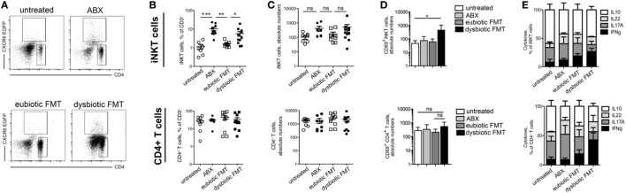 Antibiotic treatment influences colonic invariant natural killer T (iNKT) cell frequency and function (A–C) representative dot plots (A) , cumulative frequency (B) , and absolute numbers (C) of iNKT cells (upper panels) and CD4 + T cells (lower panels) in untreated mice (open circles), ABX-treated mice (closed circles), mice reconstituted with eubiotic fecal microbiota transplantation (FMT) (open squares), or with microbiota from DSS-treated mice (dysbiotic FMT, closed squares). (D) Absolute numbers of CD69 + cells among iNKT cells (upper panels) and CD4 + T cells (lower panels) in untreated mice (white bars), ABX-treated mice (light gray bars), mice reconstituted with eubiotic FMT (dark gray bars), or with microbiota from DSS-treated mice (dysbiotic FMT, black bars) (E) Cytokine production by iNKT cells (upper panels) and CD4 + T cells (lower panels) in untreated, ABX-treated, reconstituted with eubiotic or with dysbiotic FMT. Histograms normalized to 100% of production of total cytokines. Significance was determined using Kruskal–Wallis nonparametric test and expressed as mean SEM. Untreated n = 8, ABX-treated n = 10, reconstituted with eubiotic FMT n = 9, with dysbiotic FMT n = 11 or in DSS-treated n = 11 mice in four independent experiments. Outliers detected with Grubb's test. P