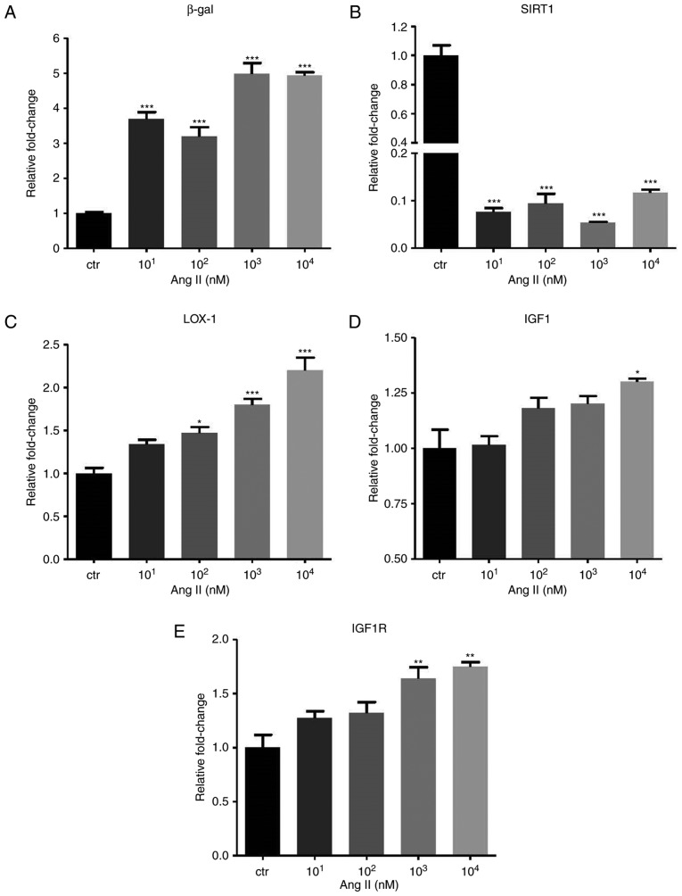 Angiotensin II influences the expression of β-gal, SIRT1 and IGF1 pathway. The mRNA levels of (A) β-gal, (B) SIRT1, (C) LOX-1, (D) IGF1 and (E) IGF1R are presented. GAPDH was used as the internal control. Values are expressed as the mean ± standard error of the mean. * P